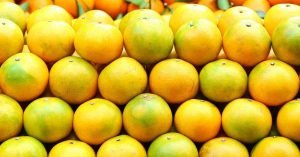 Oranges lined up